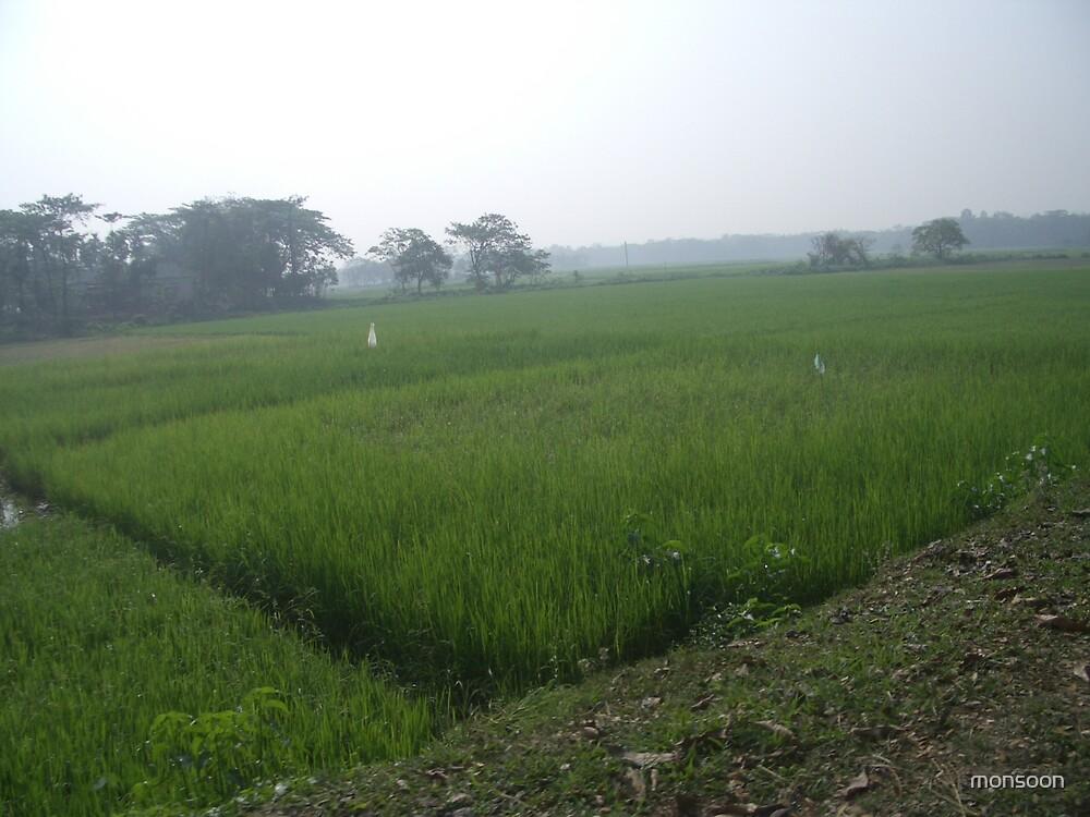 Paddy field by monsoon