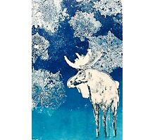 Moose Photographic Print
