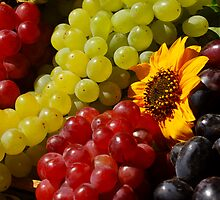 Harvest Grapes by Karin  Hildebrand Lau