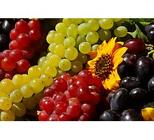 Harvest Grapes Photographic Print