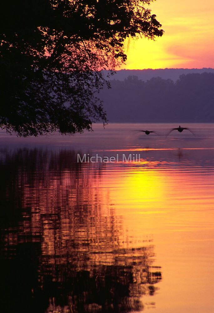 Canada Geese Landing on Lake at Sunrise by Michael Mill