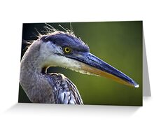 Great Blue Heron Head Shot Greeting Card