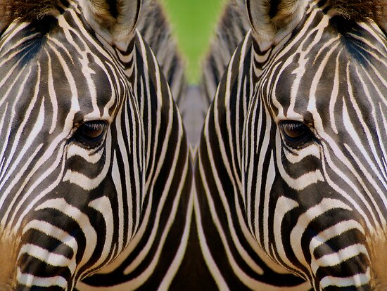 Mirrored Zebras by Michael Mill