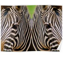 Mirrored Zebras Poster