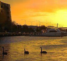 Three Swans by rufela