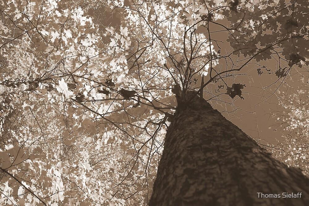 Skyward  by Thomas Sielaff