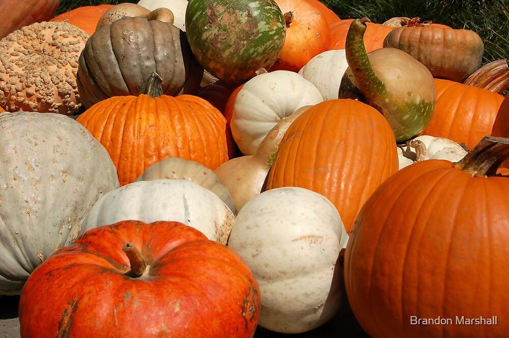 All Kinds of Pumpkins! by Brandon Marshall