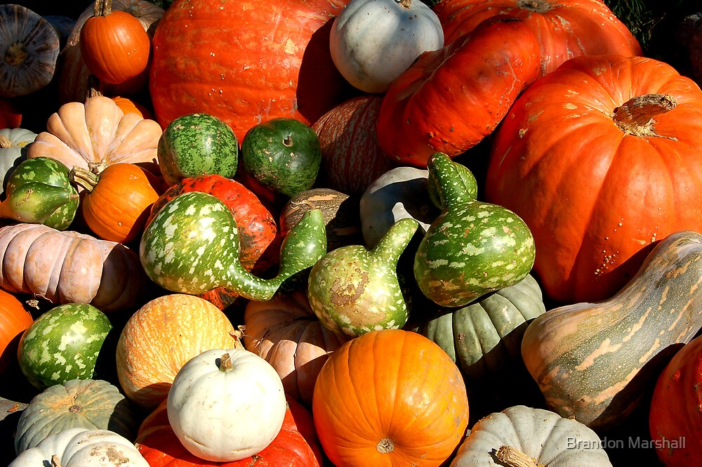 Pumpkins & Gourds by Brandon Marshall