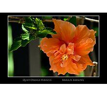 Quiet Orange Hibiscus - Cool Stuff Photographic Print