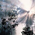 Forest Sunrays by Ern Mainka