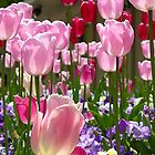 Tulip Garden at SLC Temple by cshphotos