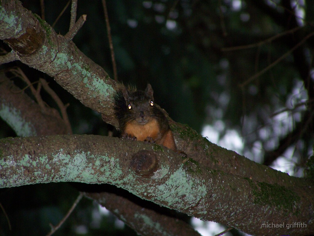 caught a creepy squirrel with his eye on me  aberdeen cemetary by michael griffith