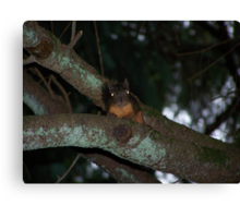 caught a creepy squirrel with his eye on me  aberdeen cemetary Canvas Print
