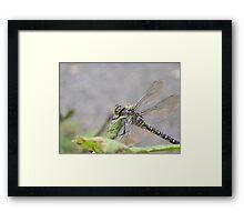 dragonfly up close  mill creek park washington Framed Print