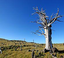 Lone Tree by Hugh M