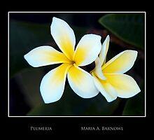 Plumeria - Cool Stuff by Maria A. Barnowl