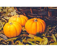 Three little pumpkins, autumn leaves and a basket Photographic Print