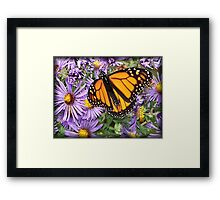 Butterfly Dines Framed Print