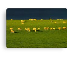 """Golden Fleece"" Canvas Print"