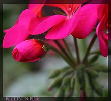Pretty in Pink  by brandham2007