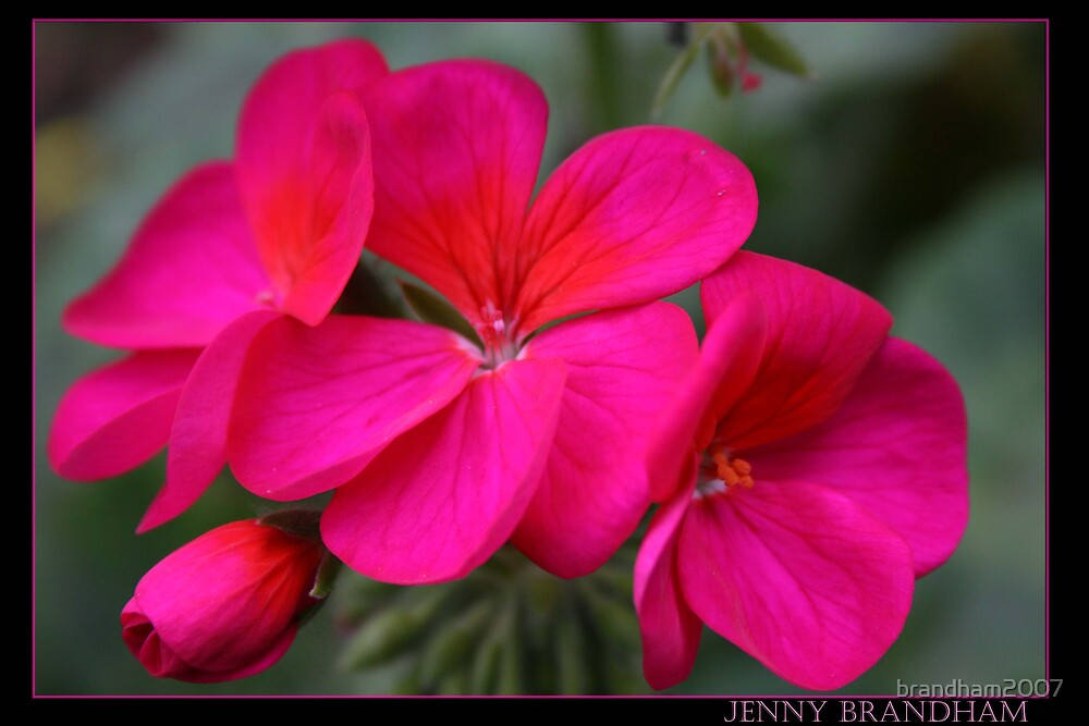 Pink Flower by brandham2007