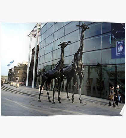 Giraffes near Omni Centre, Edinburgh Poster