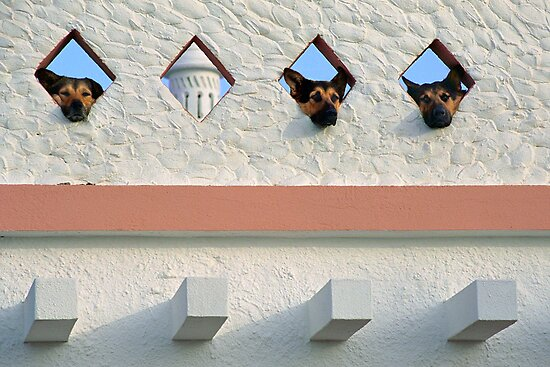 Algarve Dogs by billyboy
