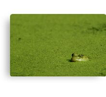 Bullfrog and Algae Canvas Print