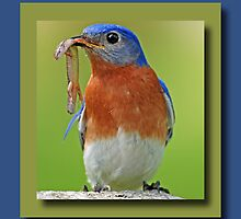 Bluebird Greeting Card by Bonnie T.  Barry