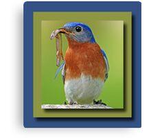 Bluebird Greeting Card Canvas Print