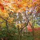 THE COLORS OF FALL IN SEATTLE by MsLiz