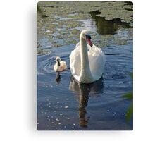 Magestic swans Canvas Print