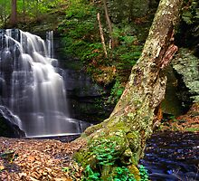 Bushkill Waterfall by Michael Mill