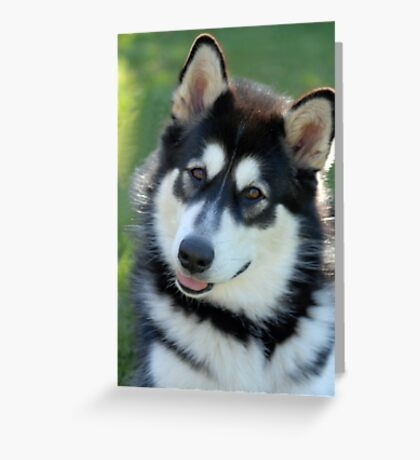 Kodi Malamute Puppy Greeting Card