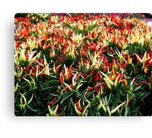 Chili Pepper Plants Canvas Print