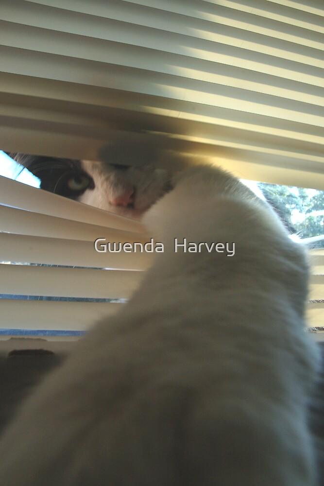 Cat 4741 by Gwenda  Harvey
