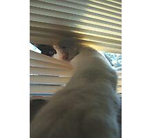Cat 4741 Photographic Print