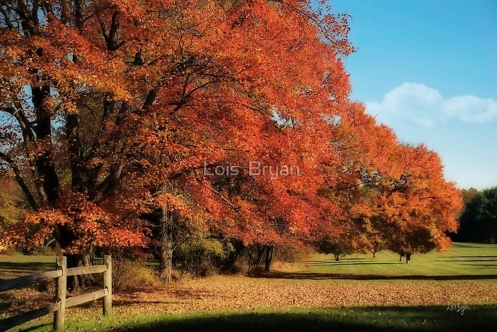 Flame Trees by Lois  Bryan