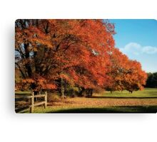 Flame Trees Canvas Print