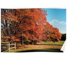 Flame Trees Poster
