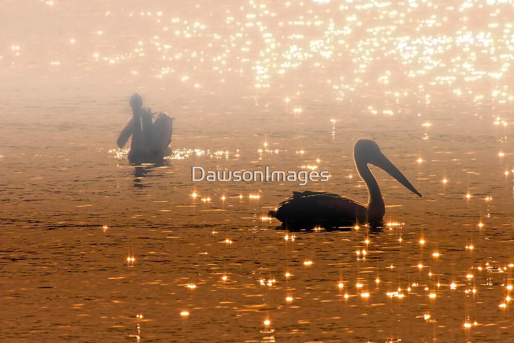 Pelican Sunrise by DawsonImages