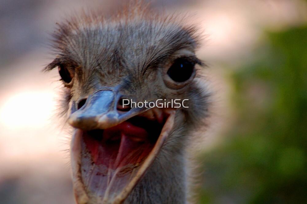 Ostrich by Bjana Hoey