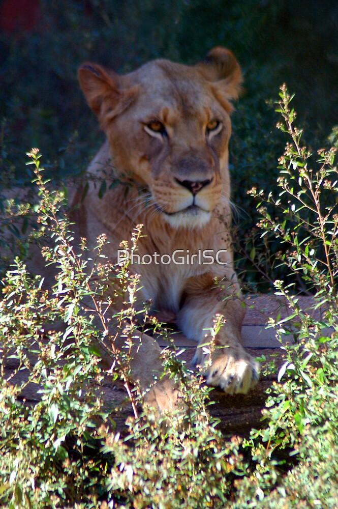 Lion by Bjana Hoey