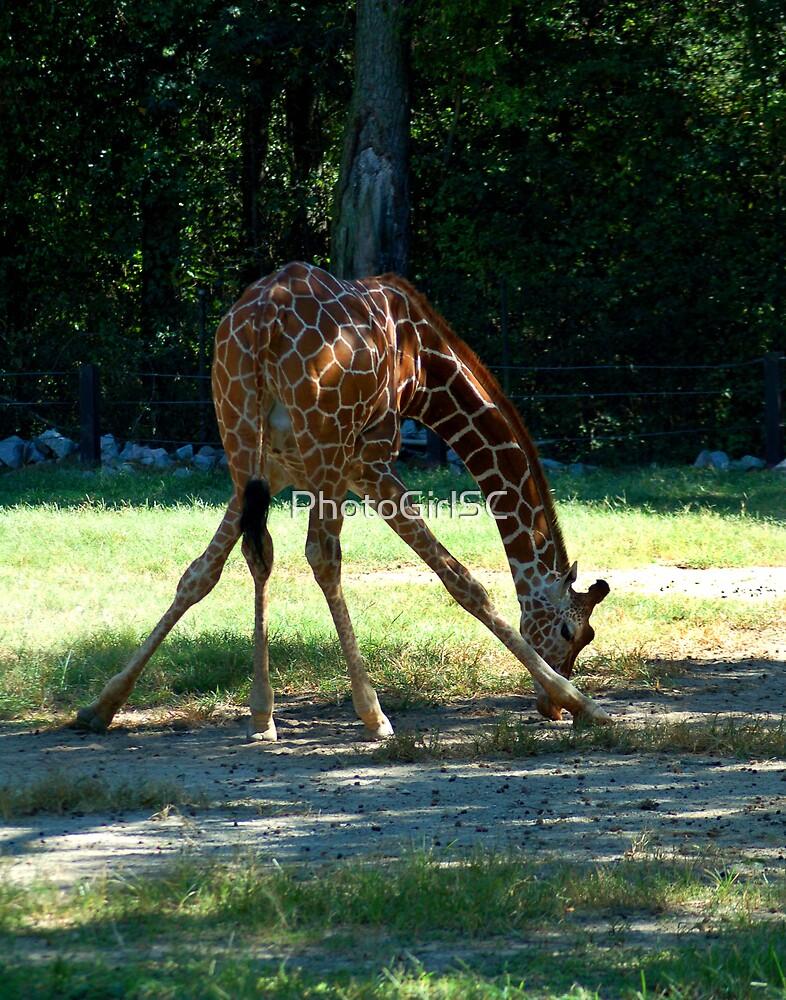 Giraffe by Bjana Hoey