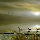 Misty Shores by Igor Zenin
