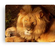 Sunset Lion Canvas Print
