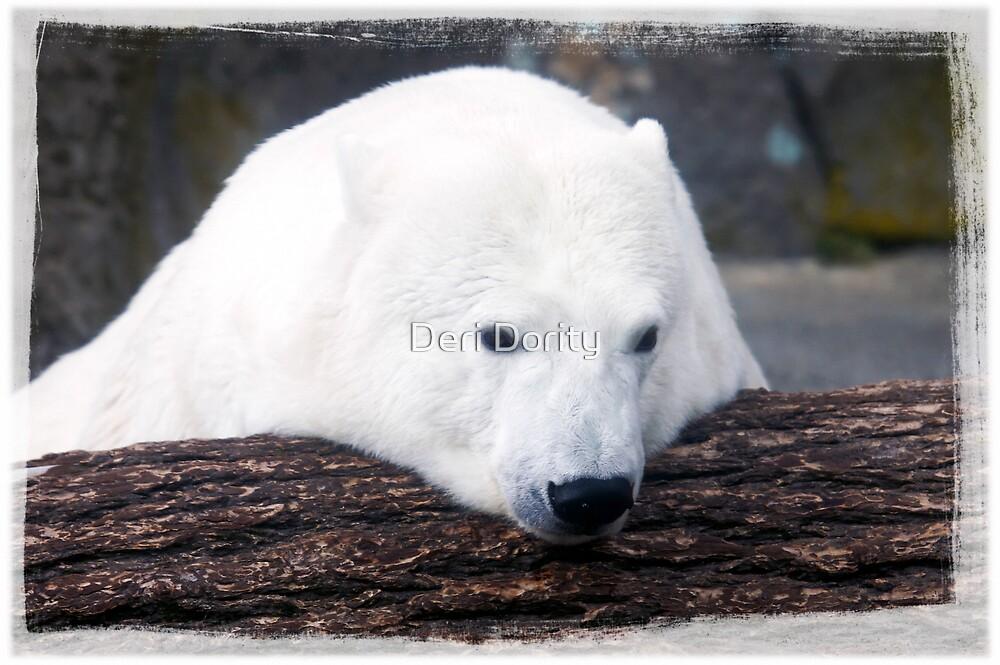 Over a log by Deri Dority