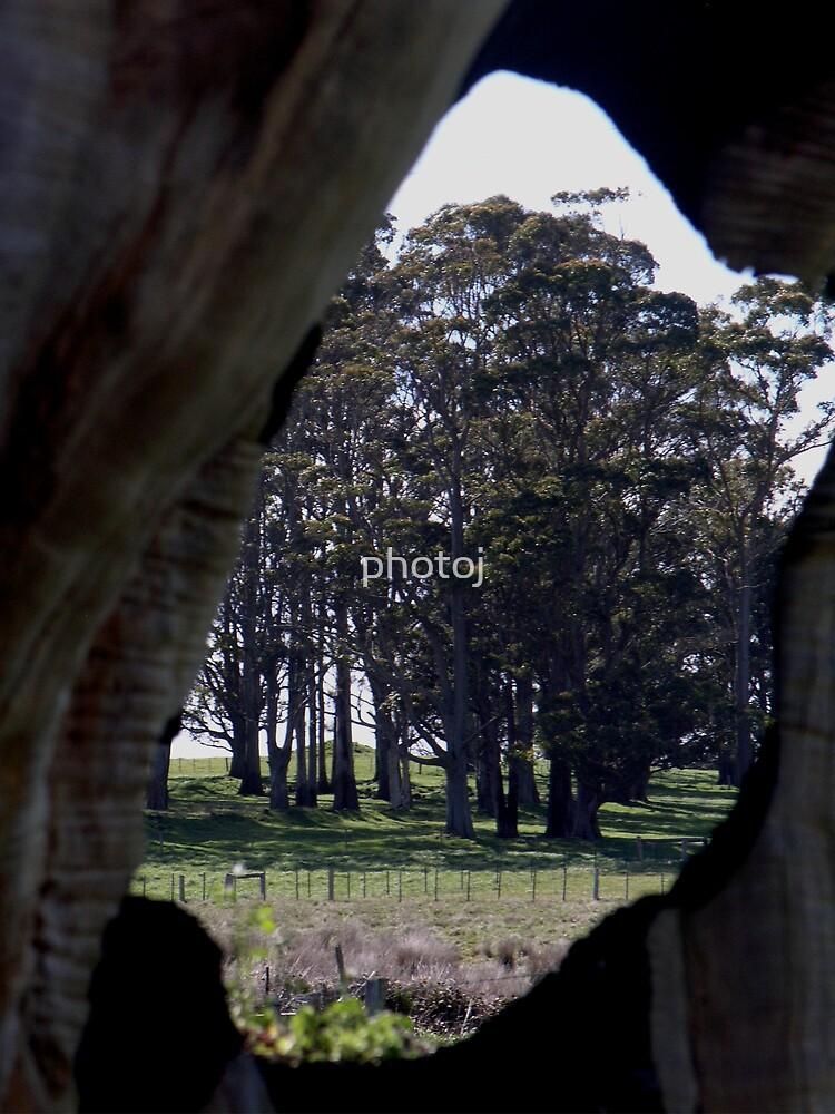 Tree Eye by photoj