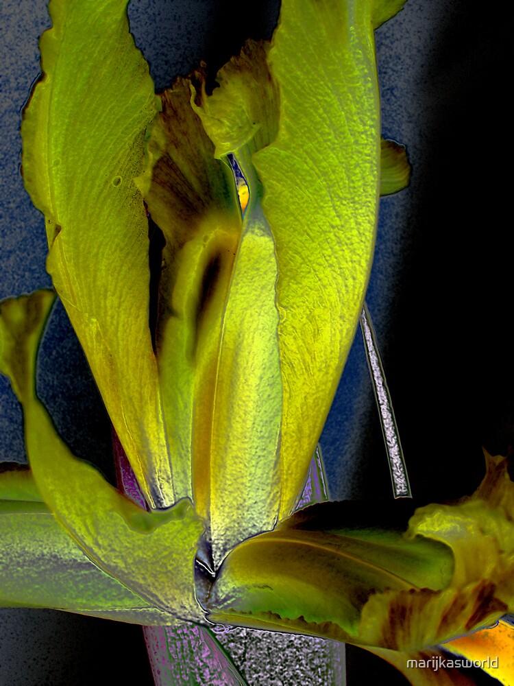 Iris 2 by marijkasworld