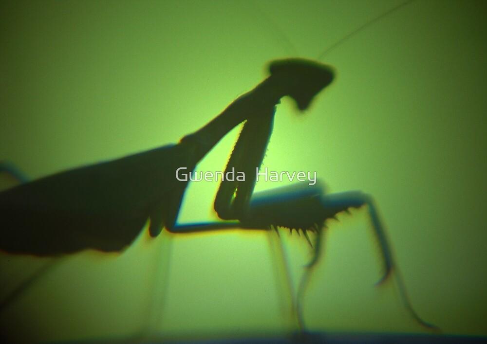 Praying Mantis  by Gwenda  Harvey